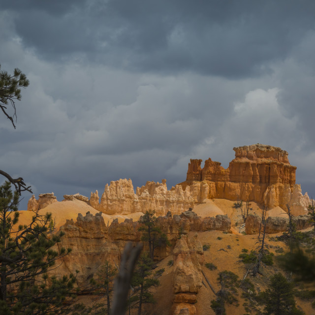 """Contrast in Bryce Canyon"" stock image"