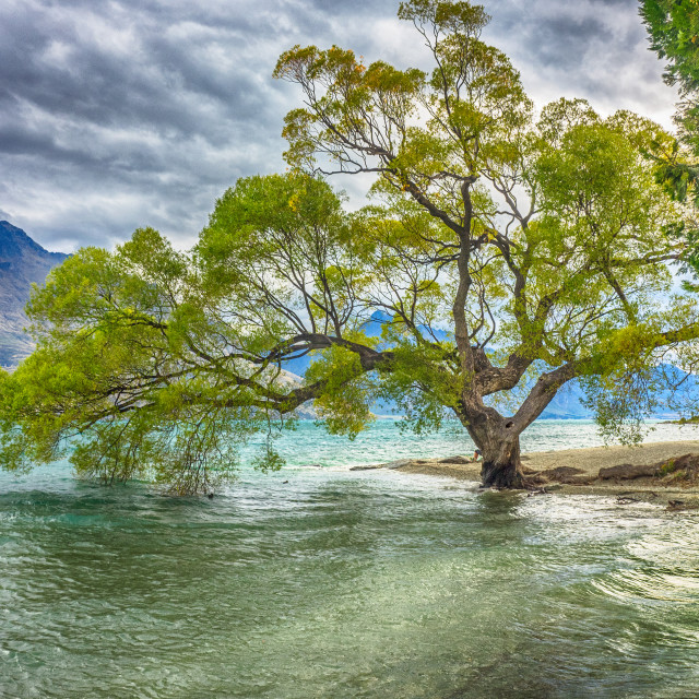 """Tree by the lake"" stock image"