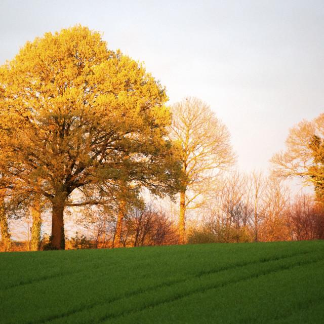 """Golden sunset, Mayenne"" stock image"