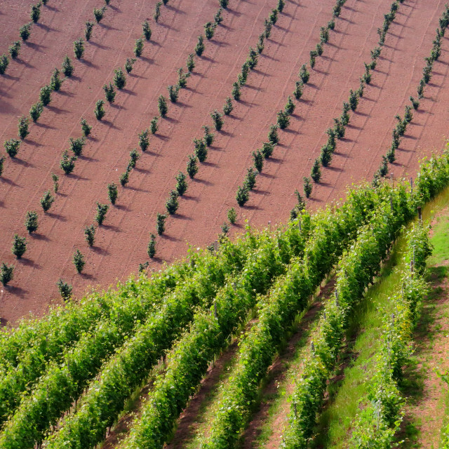 """Winegrowing landscape of Langhe"" stock image"