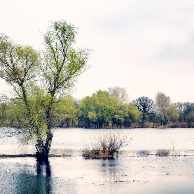 """""""Willows Close to the River"""" stock image"""
