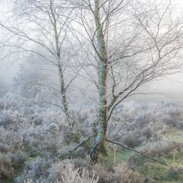 """""""Frost"""" stock image"""