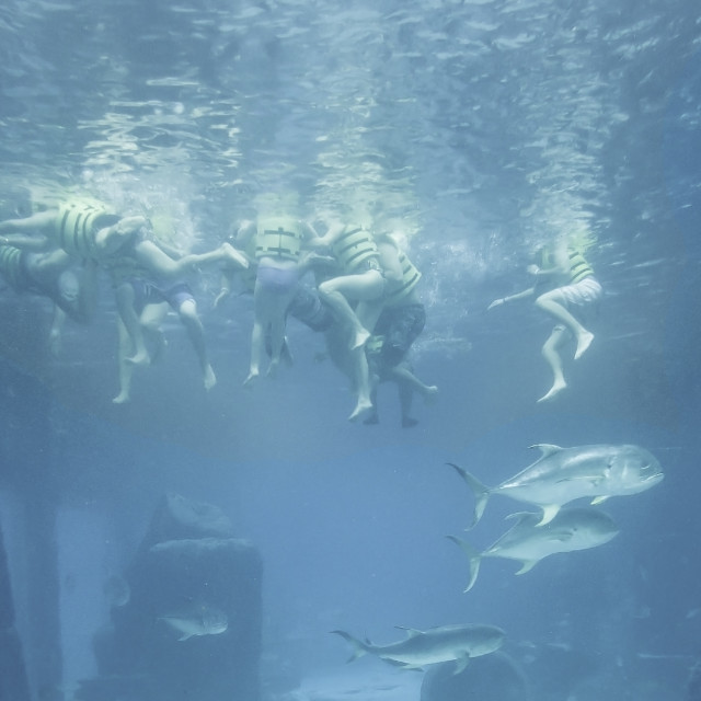 """Snorkelers"" stock image"