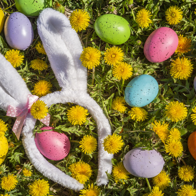 """Dandelions flowers with Easter eggs"" stock image"