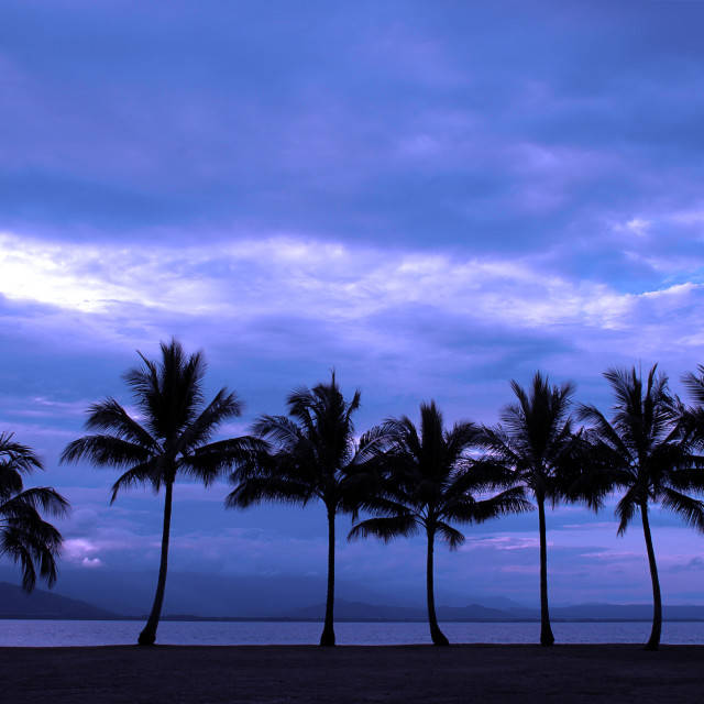 """""""Palm Trees - Cairns"""" stock image"""