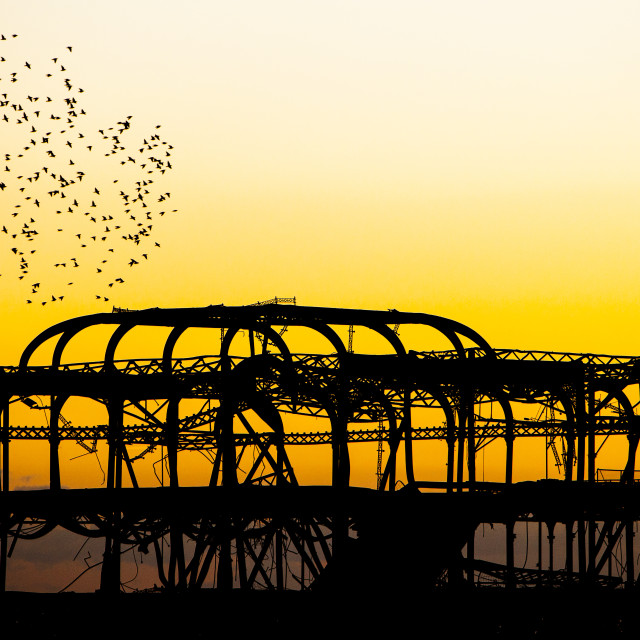 """Murmuration of Starlings - The West Pier Brighton"" stock image"