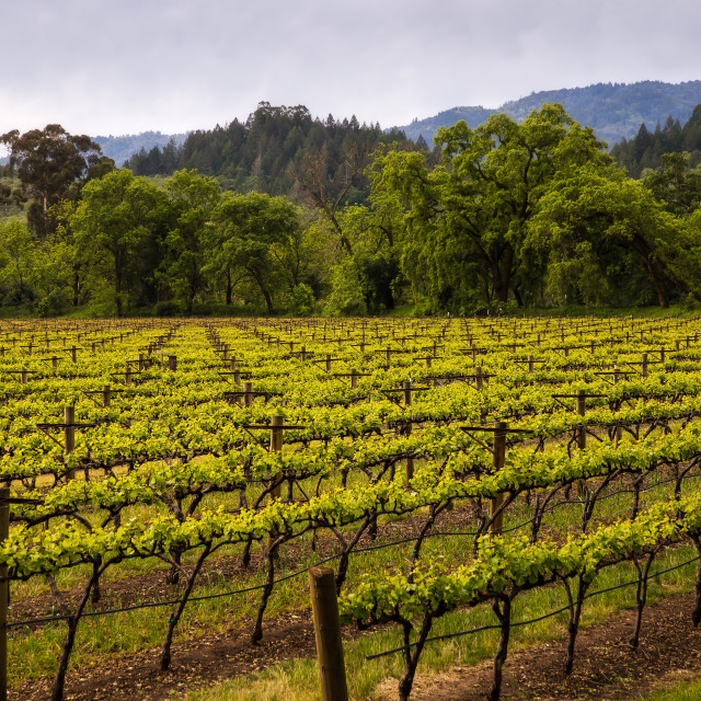 """""""Weekend in the wine country"""" stock image"""