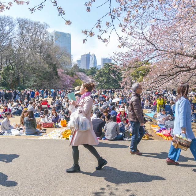 """Shinjuku Gyoen National Park during early cherry blossom"" stock image"