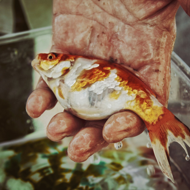 """Hand holding a fish"" stock image"