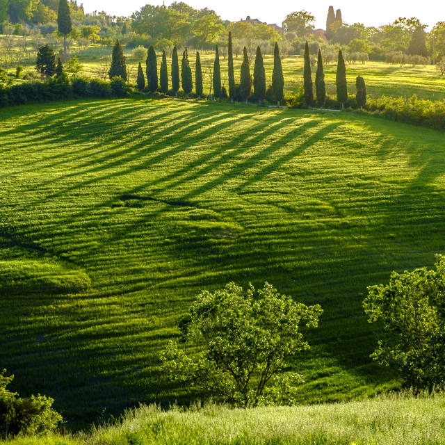 """Countryside landscape around Pienza Tuscany"" stock image"