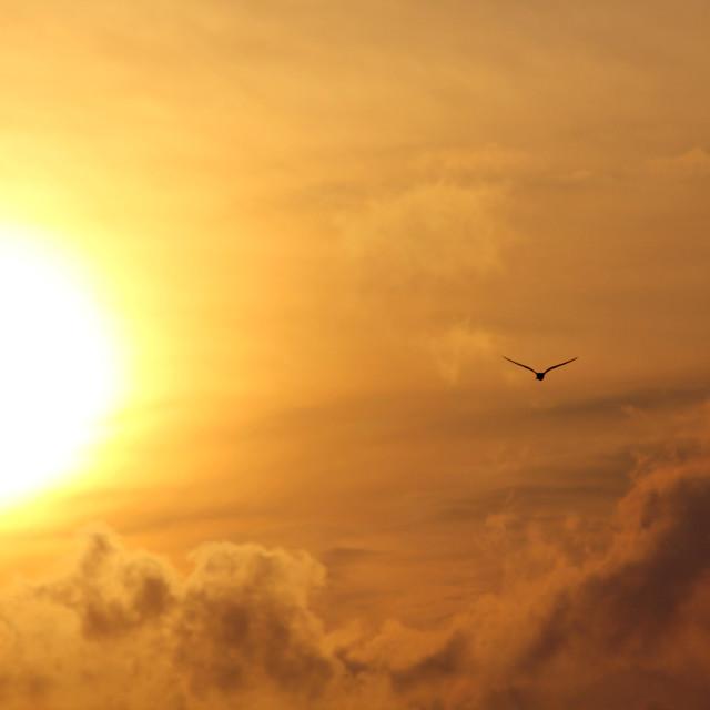 """Bird flying toward sun"" stock image"