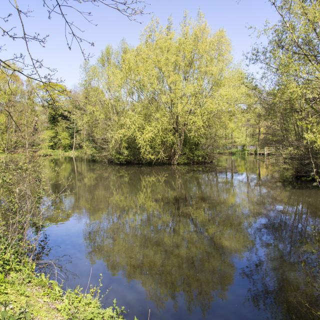 """""""Burton Mere Wetlands"""" stock image"""