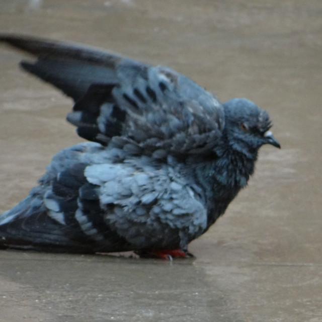 """""""Bird Bath"""" stock image"""