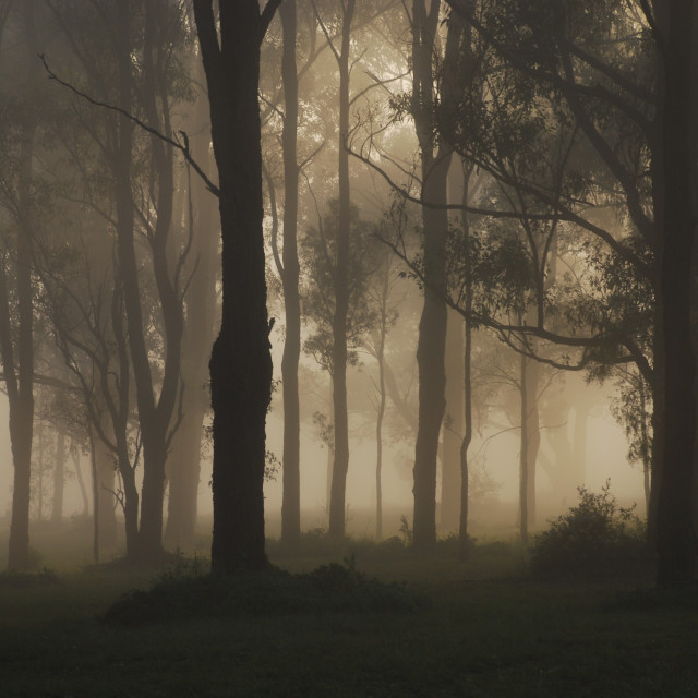 """""""Hidden in the Mist"""" stock image"""