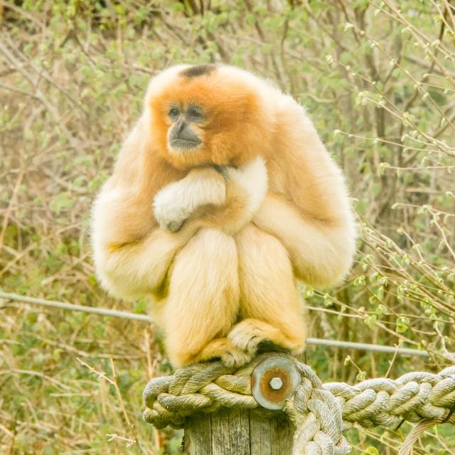 """""""Monkey World"""" stock image"""