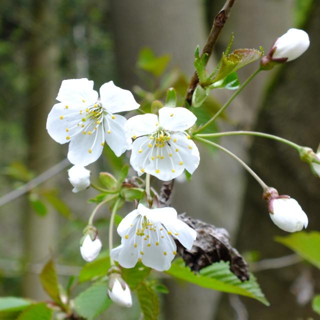 """""""Spring blossom"""" stock image"""