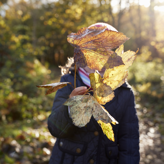 """Young Girl Playing With Leaves On Walk In Autumn Countryside"" stock image"
