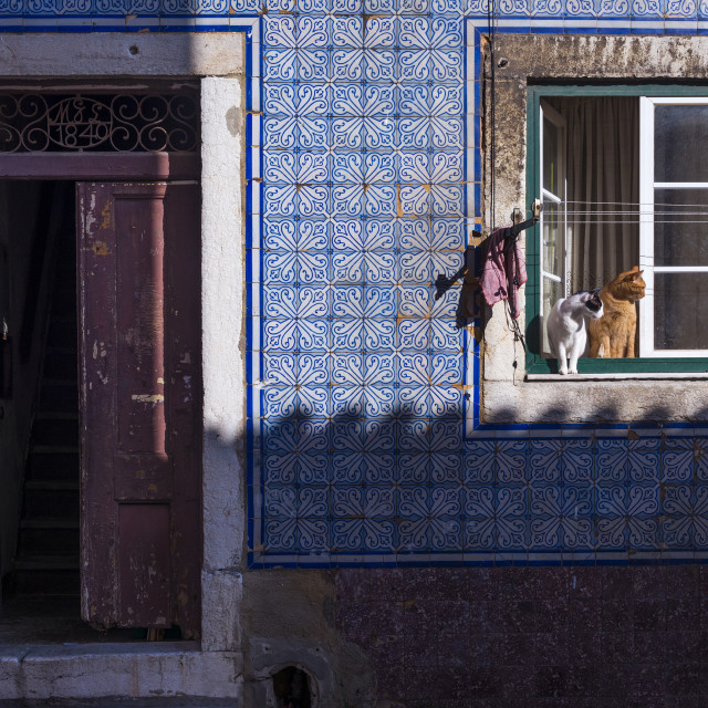 """""""Two cats at a window in an old building in the traditional Bica neighborhood in Lisbon, Portugal"""" stock image"""