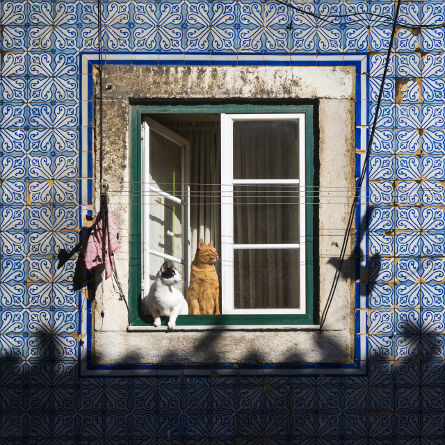 """Two cats at a window in an old building in the traditional Bica neighborhood in Lisbon, Portugal"" stock image"