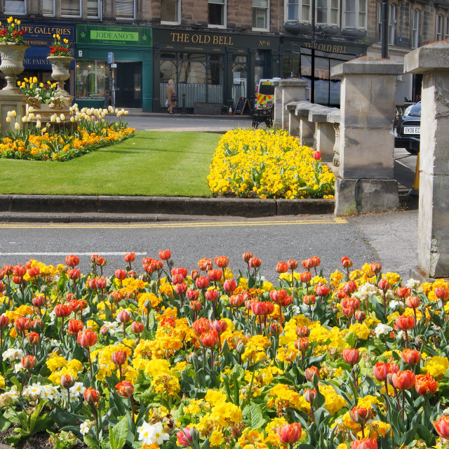 """""""The beautiful planting of primulas and tulips outside the Crown"""" stock image"""