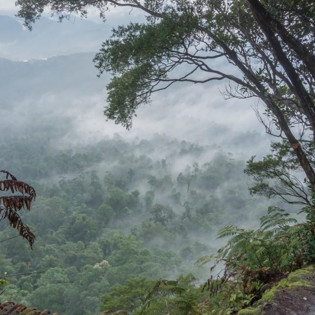 """Gunung Panti Forest Reserve"" stock image"