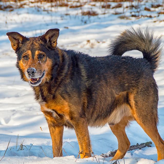 """""""Terrier hybrid dog"""" stock image"""