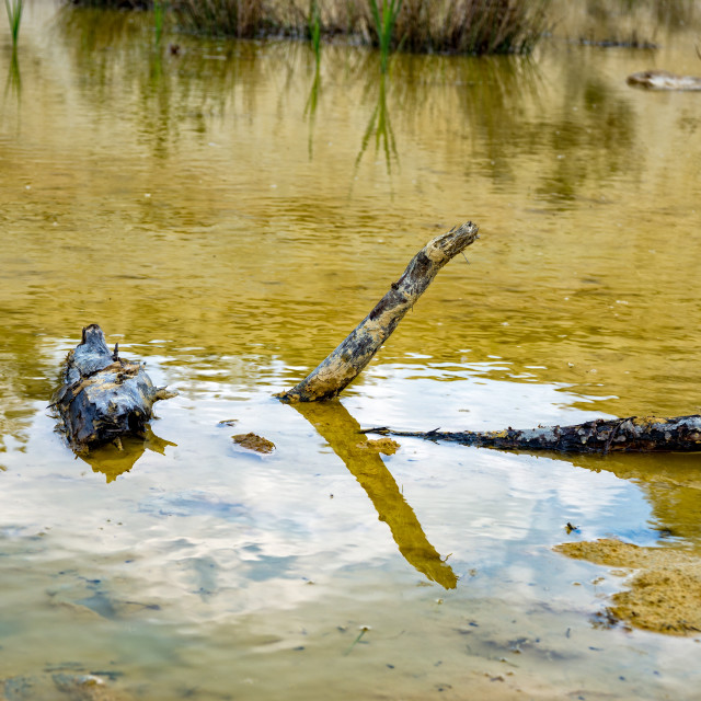 """Dead branch is located in a small pond"" stock image"
