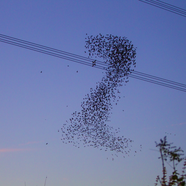 """Starling murmuration in the shape of a 2 at Didcot Oxfordshire"" stock image"