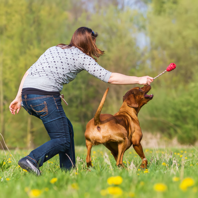 """woman with Rhodesian ridgeback"" stock image"