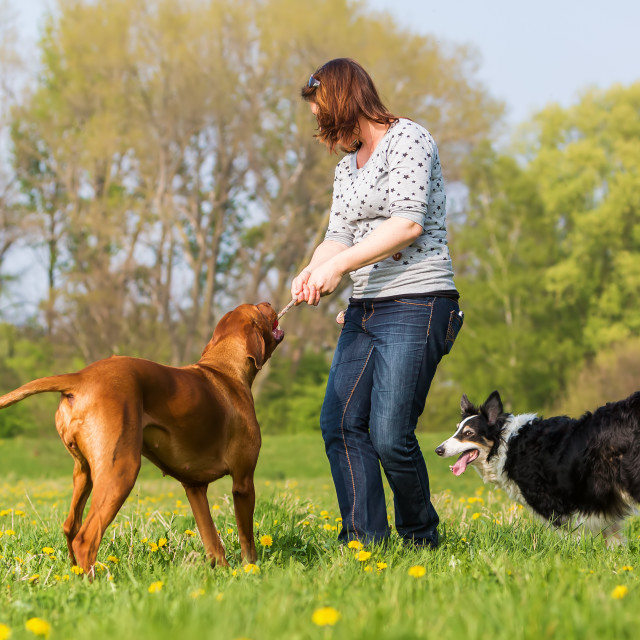 """woman with two dogs outdoor"" stock image"