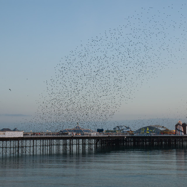 """Starling Murmuration over Brighton Pier"" stock image"
