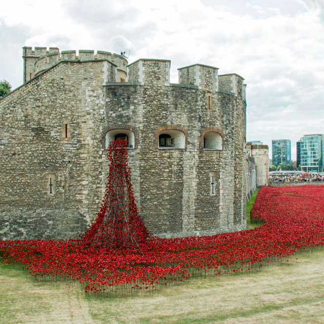"""""""Poppies at The Tower"""" stock image"""