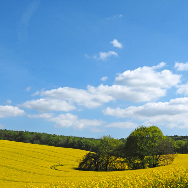 """Springtime in the Meon Valley"" stock image"
