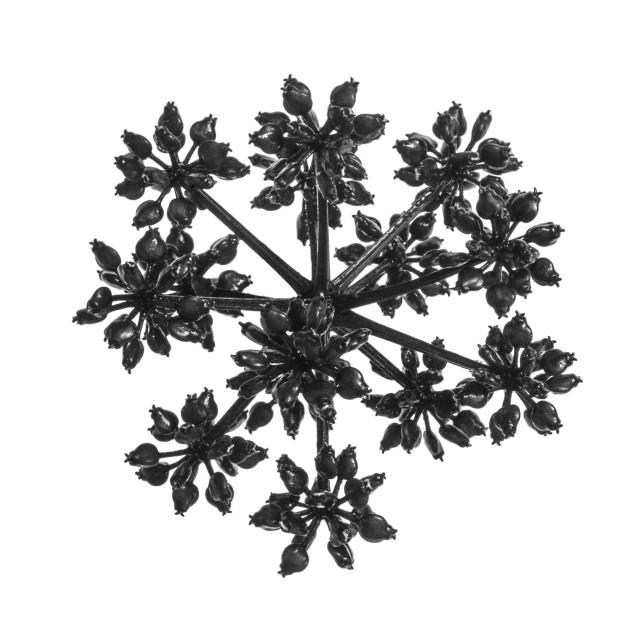 """""""Botanical 02"""" stock image"""