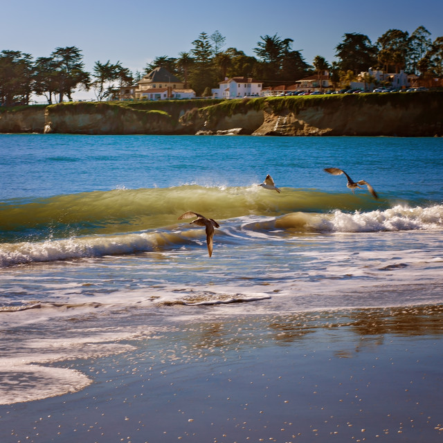 """Seagulls Flying on Santa Cruz Beach"" stock image"