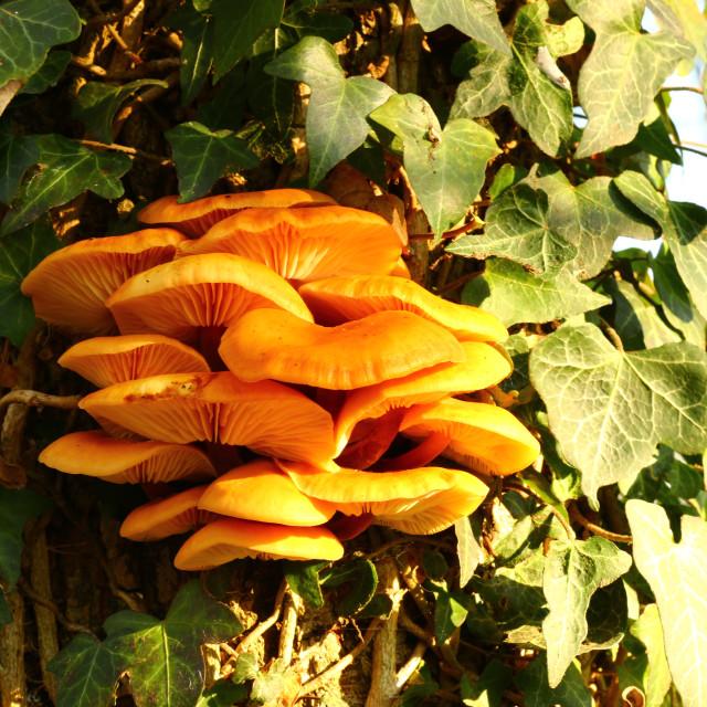 """""""Tree fungus"""" stock image"""