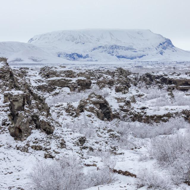 """Winter landscape Dimmuborgir Lake Myvatn, Iceland"" stock image"