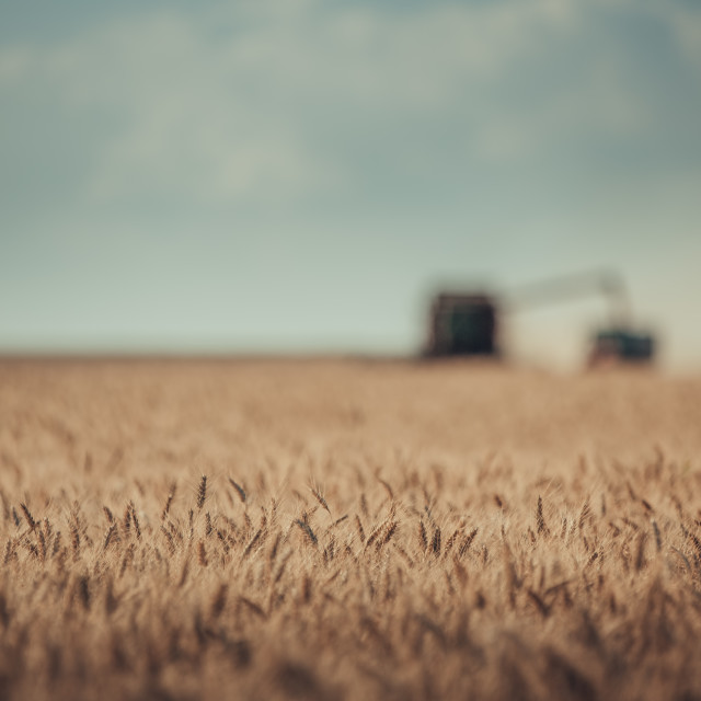 """Defocused view of Combine harvester agriculture machine harvesti"" stock image"