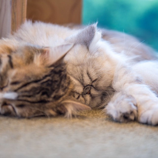 """cute sleeping cats"" stock image"