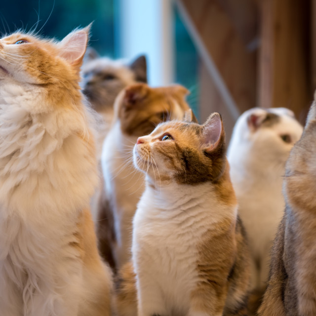 """cats looking up"" stock image"