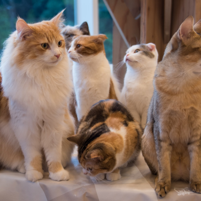 """a group of cute cats"" stock image"
