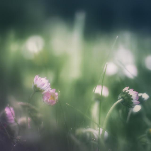 """""""Romantic flowers"""" stock image"""