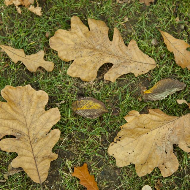 """Autumn leaves, nature"" stock image"