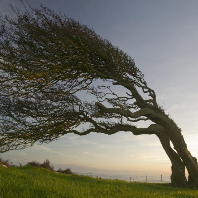 картинки как деревья гнет ветер ссылке попробуйте