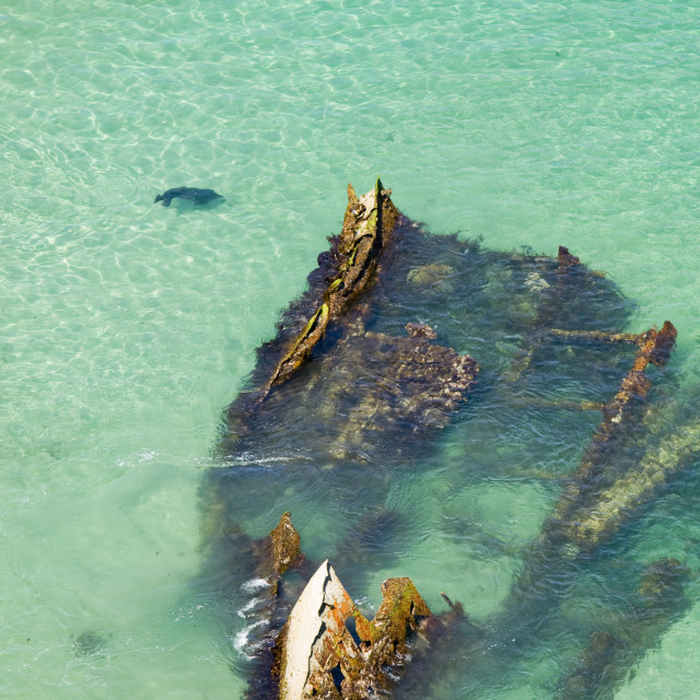 """A seal swimming past a shipwreck at Hells Mouth near Cambourne Cornwall UK"" stock image"