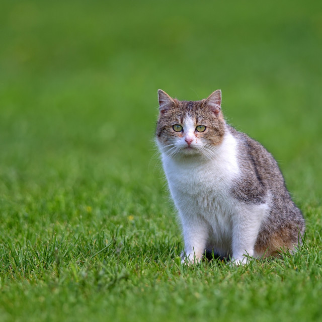 """""""Cat in a clearing"""" stock image"""