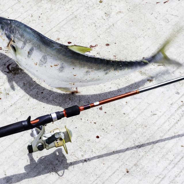 """Fishing rod"" stock image"