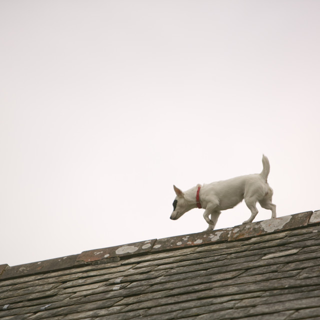 """""""A dog on a house roof in Boscastle Cornwall UK"""" stock image"""