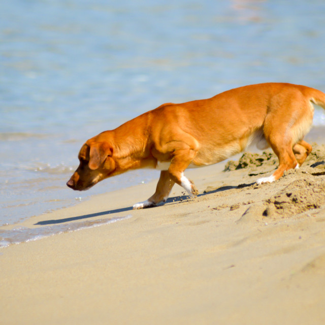 """Fearful dog facing the waves of the ocean"" stock image"
