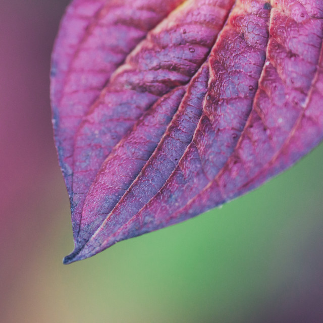 """""""Fading colours"""" stock image"""